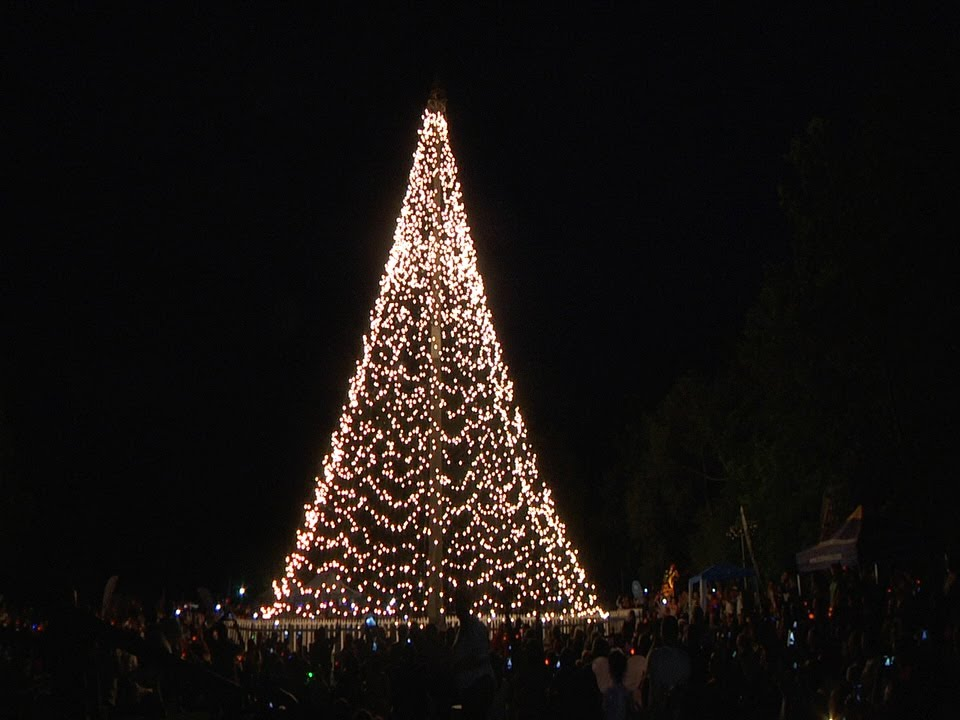 Beautiful Tree Of Light At The Johannesburg Zoo With Wits Hospice U0026 The Star Photo