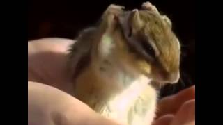 Slow Motion Cuteness Vine By   Best Animal Vines