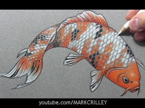 Realistic koi drawing images for The coy carp