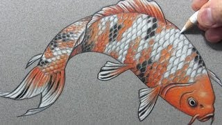 "Drawing Time Lapse: ""Koi"" Fish (Carp)"