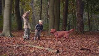 видео Рейтинг кормов для собак премиум класса – 2018