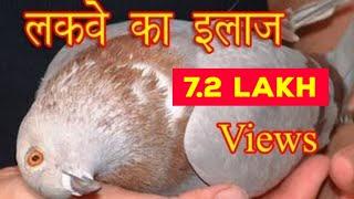 Lakwa Disease Treatment 100% Result By Aman Prabhakar