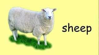 English Vocabulary - Animals 1 (improve)