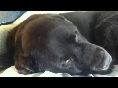 Dog Dreaming 2: NIGHTMARE