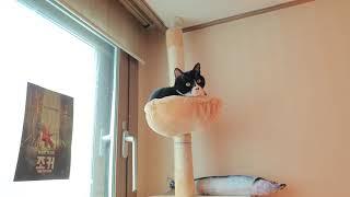 해먹에서 휴식을 보내는 고양이