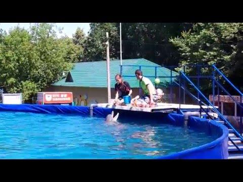 "Летний дельфинарий «Морской театр». Summer Dolphinarium ""Maritime Theatre"""