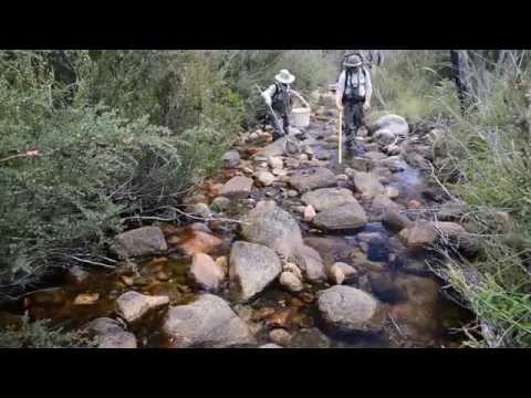 Backpack Electrofishing In The Australian Capital Territory