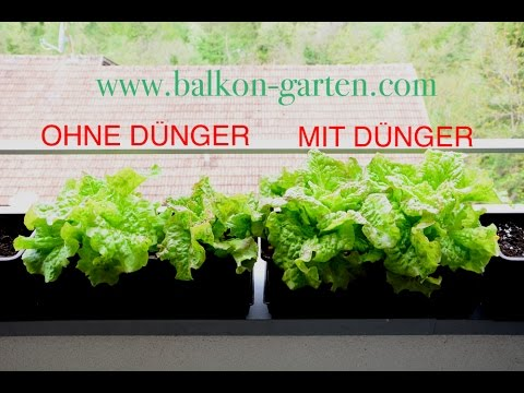 salat d ngen mit und ohne der unterschied balkon garten 2016 youtube. Black Bedroom Furniture Sets. Home Design Ideas