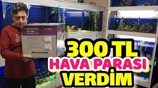 30 AKVARYUMA YETECEK KADAR HAVA MOTORUNU KURUYORUM, akvaryum balıkları
