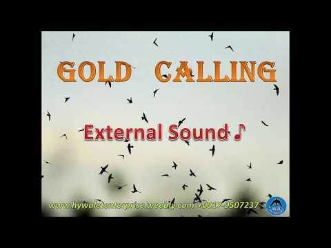 "Swiftlet Sound- ""Gold Calling"" Sample ( HY WALET)"
