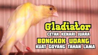 Download Modal Indukan BELGIAN BOSSU Cetak Kenari BONGKOK UDANG Goyang Tahan Lama GACOR Mp3
