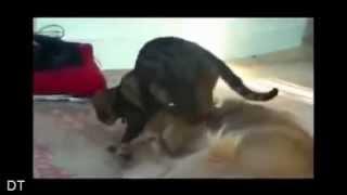 Смешные кошки   6-2, прикольное видео, обхохочешься!!!!! Позитив!!!