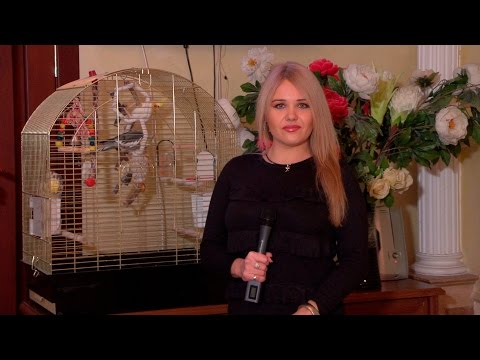 Видео Талисман салон красоты в челябинске