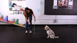 Teach Your Dog to Jump through a Hoop | Dog Tricks