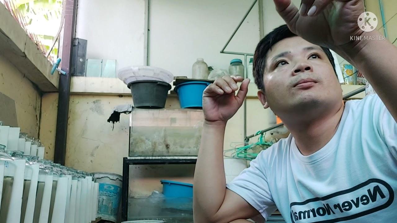 #Betta fish  #ปลากัดเก่ง  ตอบปัญหาในการเลี้ยงปลากัด การวนน้ำปลากัด