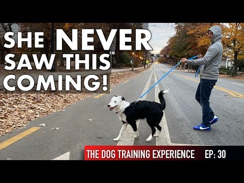 See everything I do in our most intense dog training session yet!