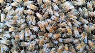 잡화꿀 들꽃꿀 언제 가득 찰까요