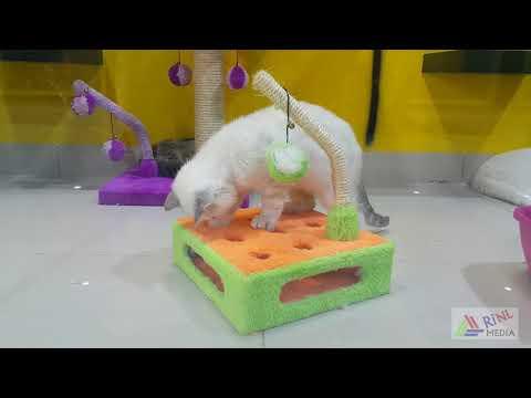 Birds and Pets Market Dubai 4K UAE | الطيور والحيوانات الألي