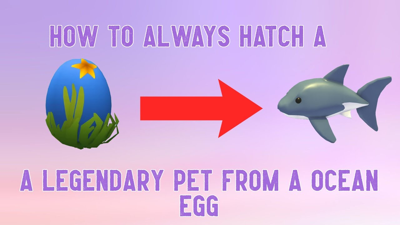 Download How to always hatch a shark from a ocean egg | Adopt Me