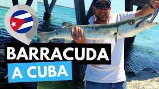 Pescare a #Cuba? Occhio al Gran Barracuda. #smile