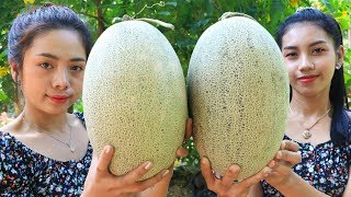 Yummy cooking dessert Melon recipe - Natural Life TV