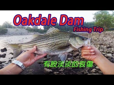 釣遊-賭徒心態要不得(Oakdale dam, indiana Fishing trip)