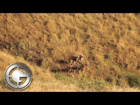 Earl Baskerville Marble Island Australia Rusa Deer Hunt