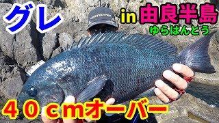 由良半島でトーナメンターとグレ釣り勝負!!! thumbnail