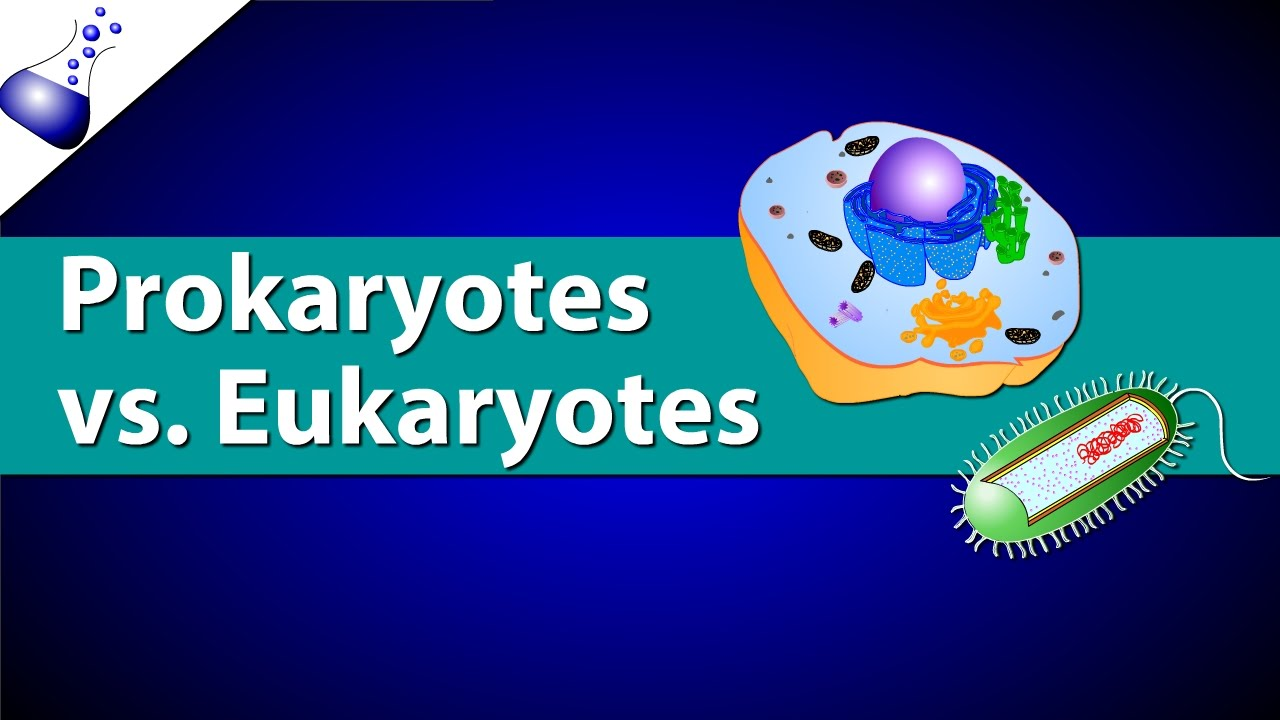 Prokaryotic Vs Eukaryotic Cells YouTube – Prokaryotes Vs Eukaryotes Worksheet