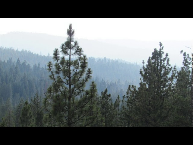 Morning Song: Sagehen Experimental Forest, California | Natural Sound