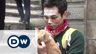 В Японии празднуют День кошек