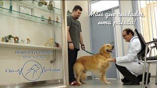 Hospital Veterinário Almir Tavares - Mais que cuidados, uma paixão!  Maceió, Alagoas
