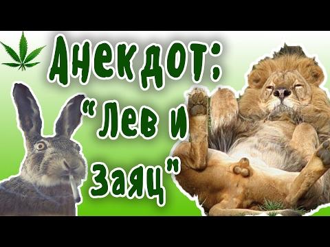 анекдоты про животных для детей 8 лет
