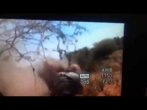 African Lion Attacks and Mauls Hunter