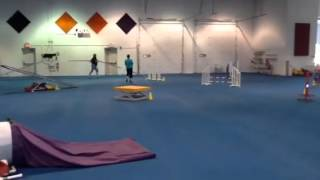 English Springer Spaniel Agility Trial