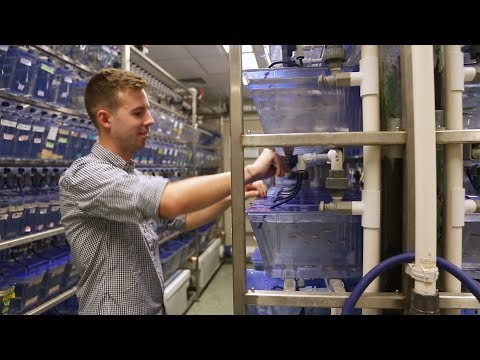 Zebrafish Research | Behind The Scenes Of The Johns Hopkins Zebrafish Facility