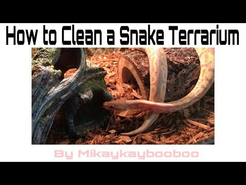 How to Clean a Snake Terrarium