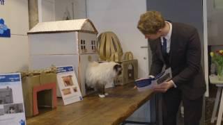 世界初!猫のための不動産屋がイギリス・ロンドンにオープン