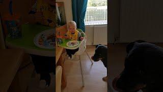 boy-shares-dinner-with-friendly-rottweiler-viralhog