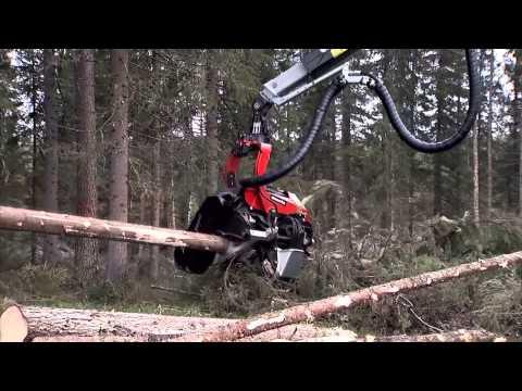 Công nghệ khai thác gỗ của Nhật Bản