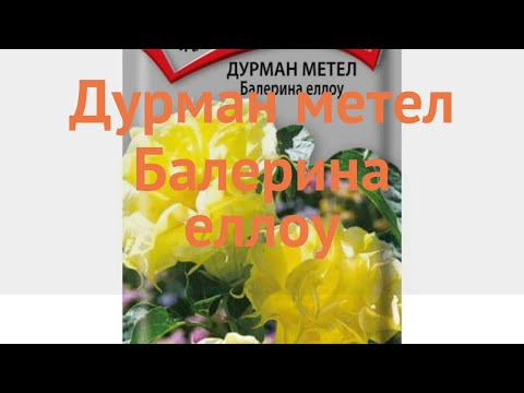 Дурман обыкновенный Метел Балерина еллоу 🌿 обзор: как сажать, семена дурмана Метел Балерина еллоу