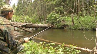 Рыбалка в царстве бурелома 286