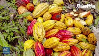 Colombian company bringing best of Colombian products to CIIE