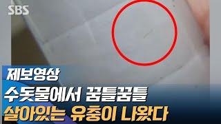 수돗물에 꿈틀꿈틀 유충이…인천 서구 아닌, 계양구에도 나왔다 (제보영상) / SBS