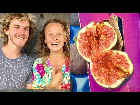 DAY IN THE LIFE : RAW VEGAN FRUITARIAN COUPLE
