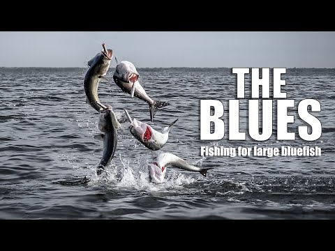 The Blues - Fishing For Early Spring Large Bluefish, New York