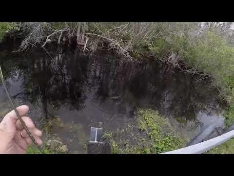 Tamiami Trail Fishing