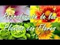 Reproducción de las Plantas con Flores ¿Cómo son las Flores? Partes y Características de una Flor