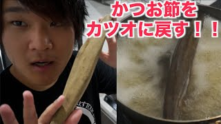 【実験】かつお節の塊をカツオに戻したい!! カツオクジラ 検索動画 14
