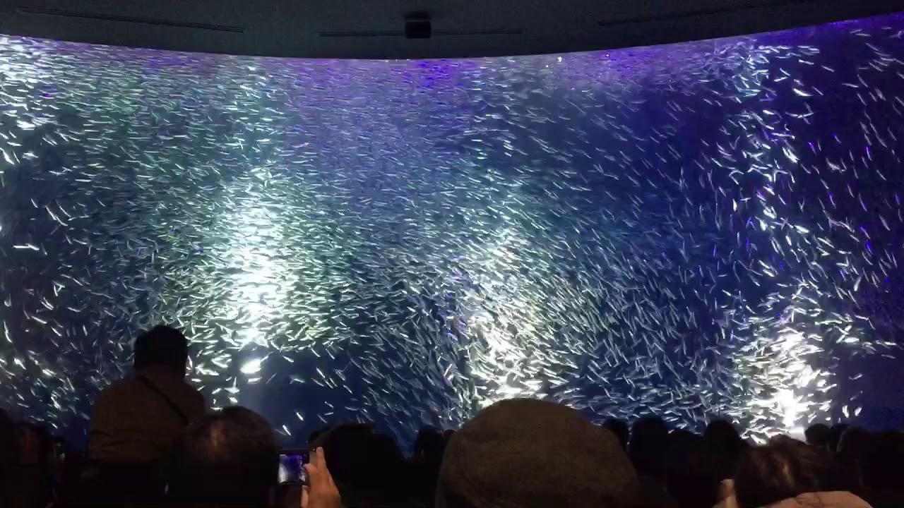 名古屋 港 水族館